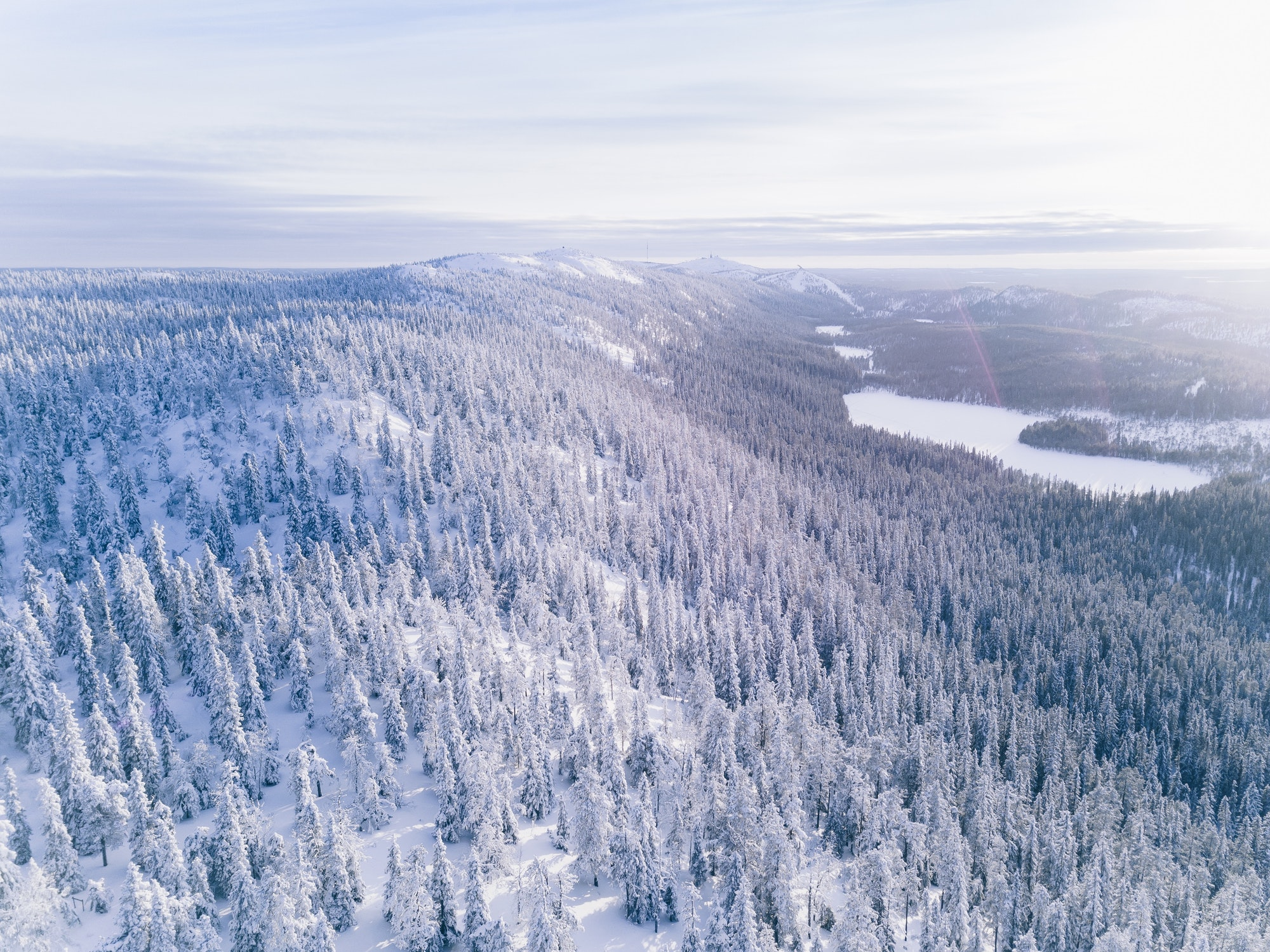 Aerial view of winter forest covered in snow.